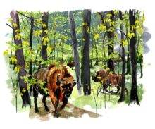 Ending logging in the Bialowieza Forest