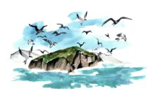 Protecting Biodiversity of Redonda Island