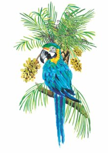 Protection of the Blue Throated Macaw