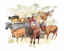 Holistic land and livestock-Zimbabwe