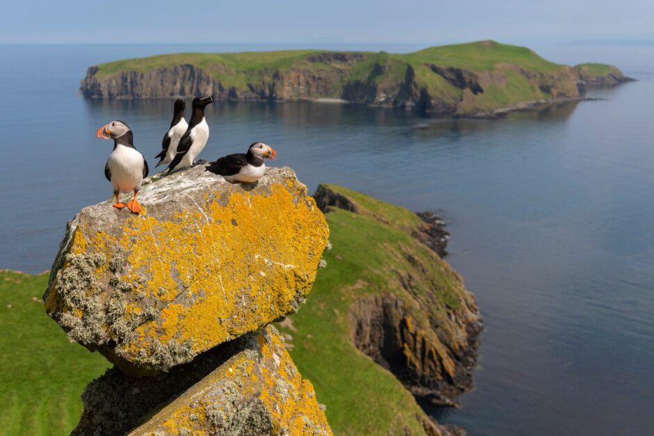 credit: Aidan Maccormick/scotlandbigpicture.com
